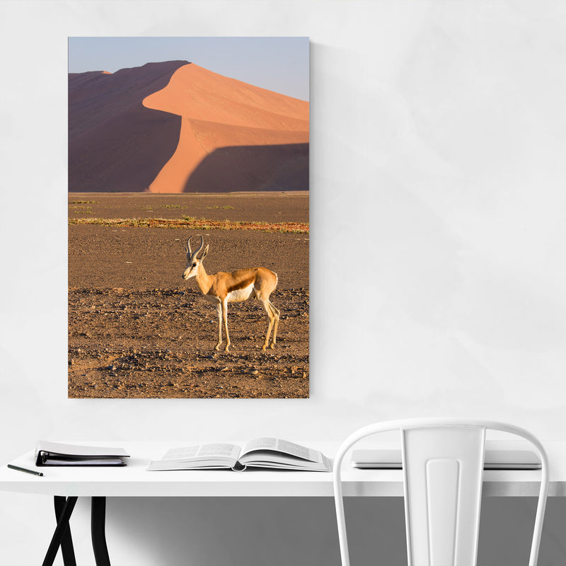 Namibia Springbok Animal Metal Art Print