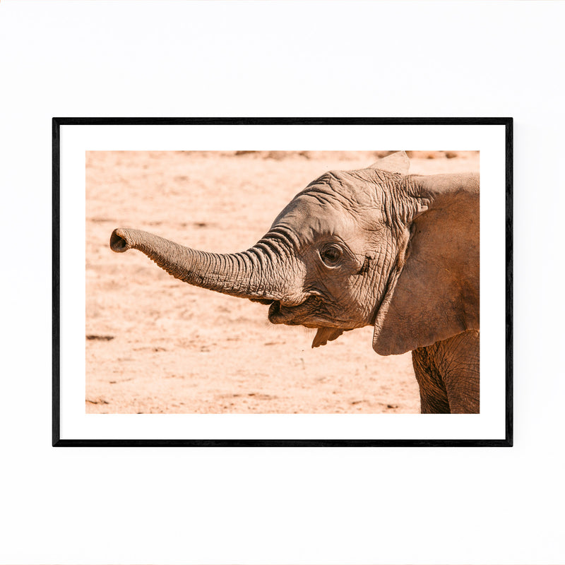 Namibia Elephant Wildlife Animal Framed Art Print
