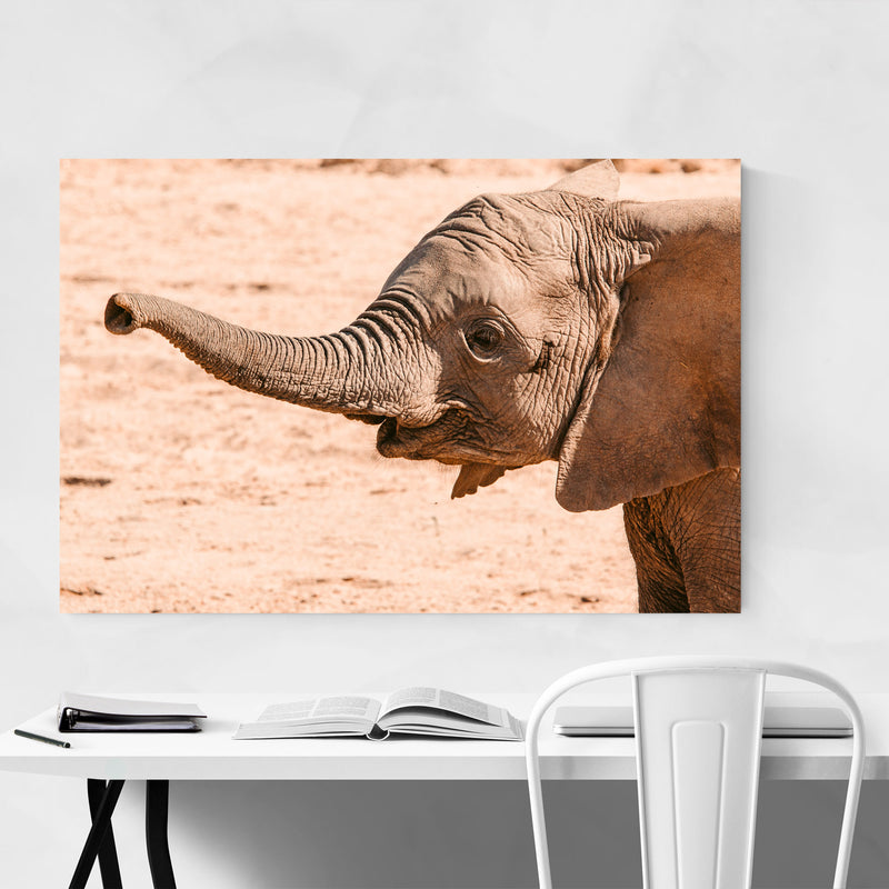 Namibia Elephant Wildlife Animal Canvas Art Print
