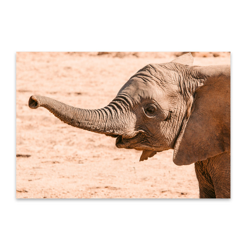 Namibia Elephant Wildlife Animal Metal Art Print