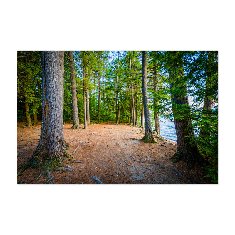 New Hampshire Trail in Forest Art Print