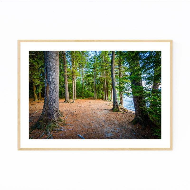 New Hampshire Trail in Forest Framed Art Print