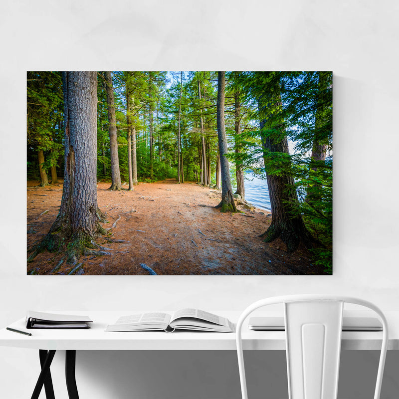 New Hampshire Trail in Forest Metal Art Print