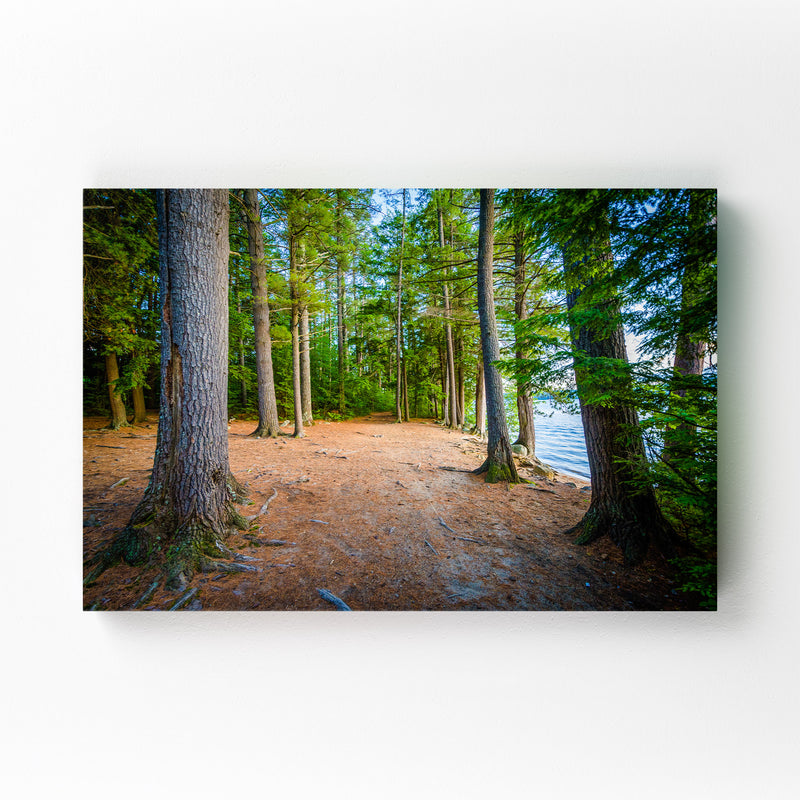 New Hampshire Trail in Forest Canvas Art Print