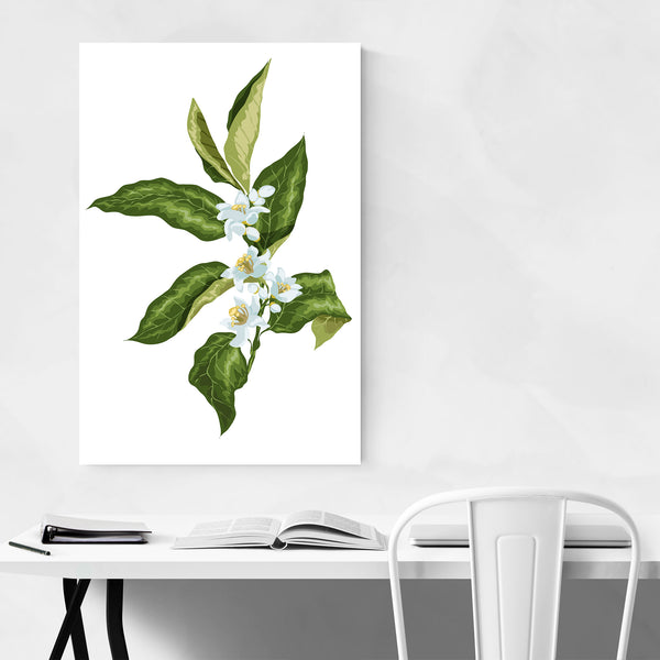 Citrus Tree Floral Botanical Nature Art Print