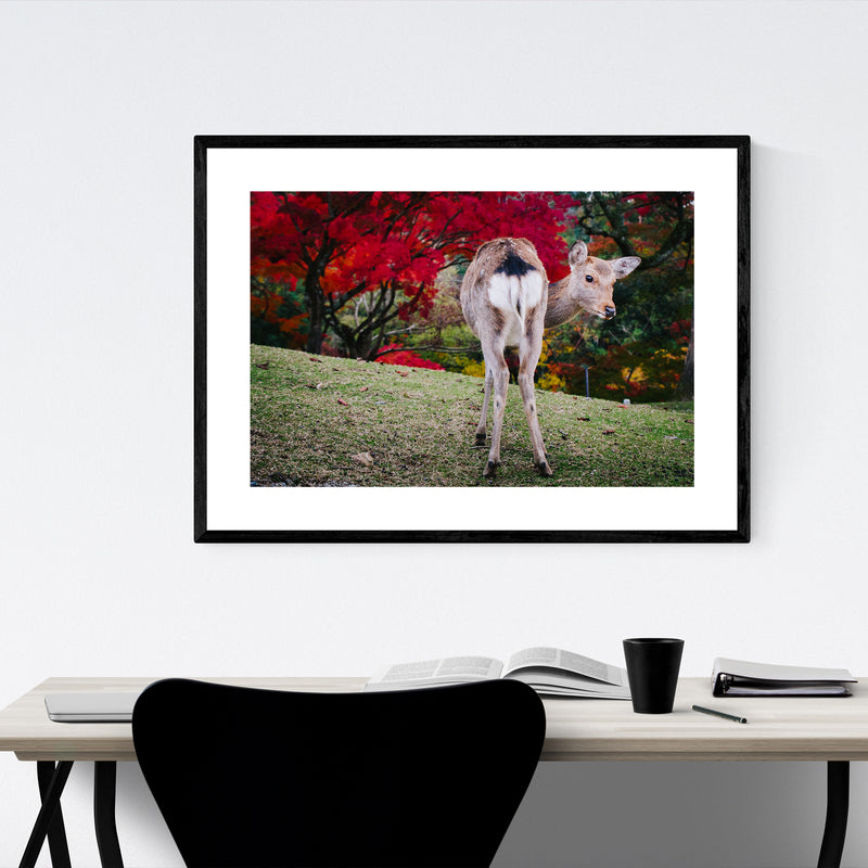 Nara Japan Deer Autumn Photo Framed Art Print