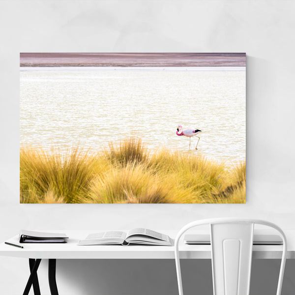 Flamingo Bird Wildlife Bolivia Art Print