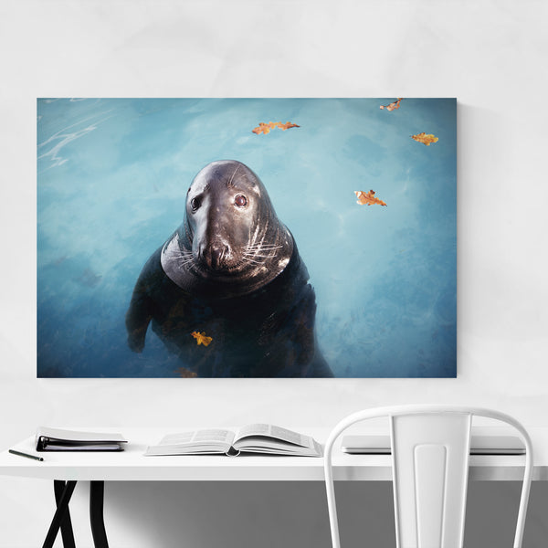 Seal Animal Coastal Nature Art Print