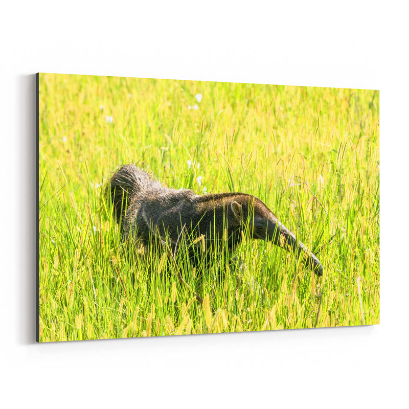 Anteater Animal Pantanal Brazil Canvas Art Print