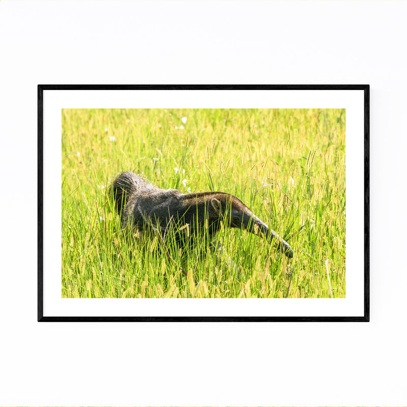 Anteater Animal Pantanal Brazil Framed Art Print