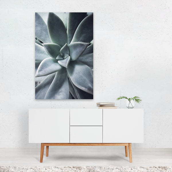 Nature Botanical Floral Succulents Art Print