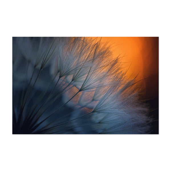 Dandelion Bokeh Photography Art Print