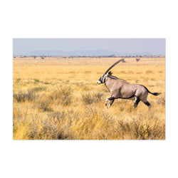 Etosha National Park Art Print