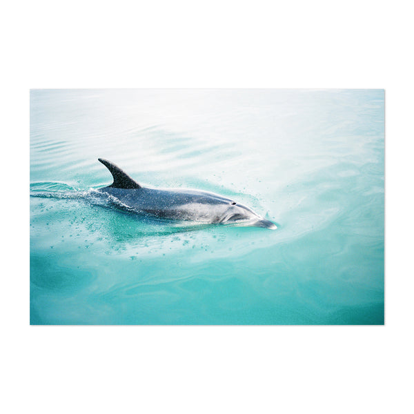 Dolphin Animal Ocean Swimming Art Print