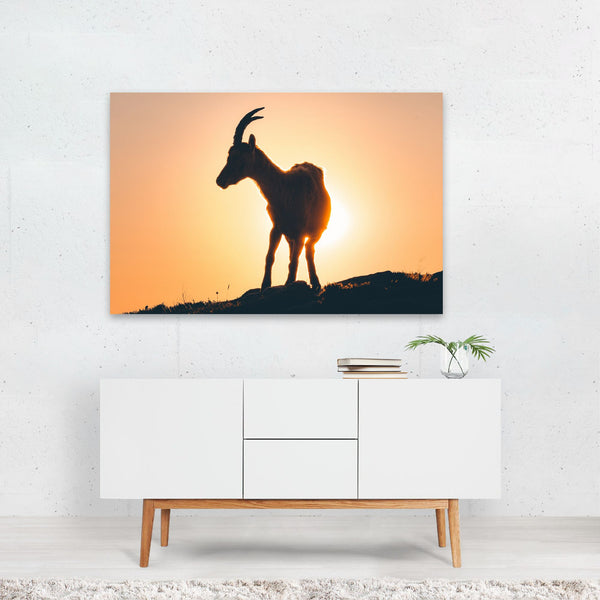 Bernese Highlands Switzerland Ibex Art Print