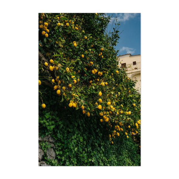 Ravello Italy Beach Lemons Photo Art Print