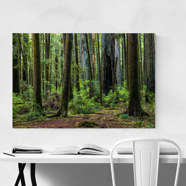 Redwood Trees Forest California Art Print