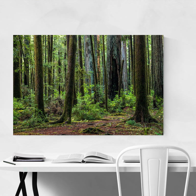 Redwood Trees Forest California Canvas Art Print