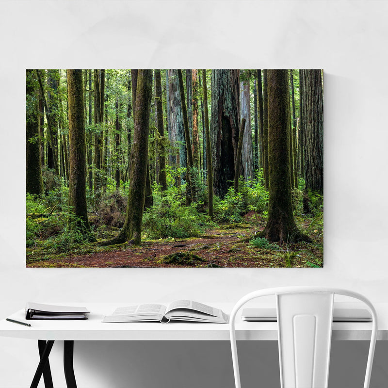 Redwood Trees Forest California Metal Art Print