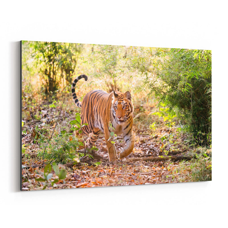 Bengal Tiger Wildlife India Canvas Art Print