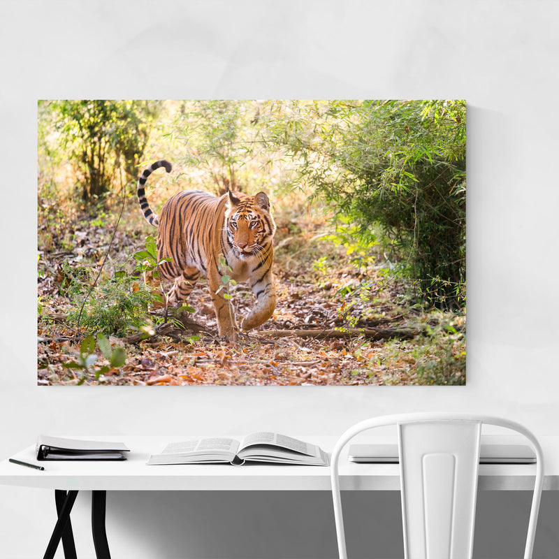 Bengal Tiger Wildlife India Metal Art Print