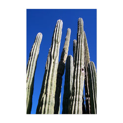 Arizona Desert Cactus Botanical Art Print