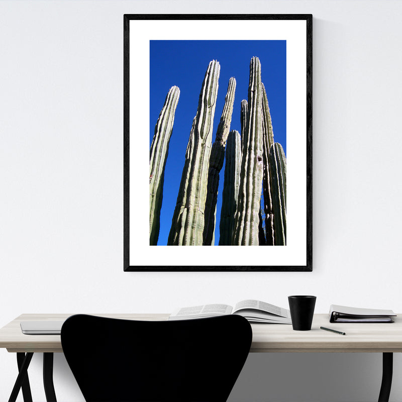 Arizona Desert Cactus Botanical Framed Art Print