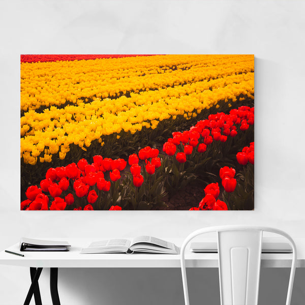 Tulips Skagit Valley Washington Art Print