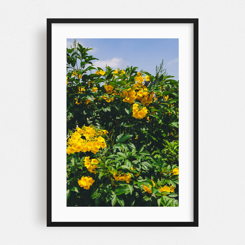 Austin Texas Floral Nature Photo Framed Art Print