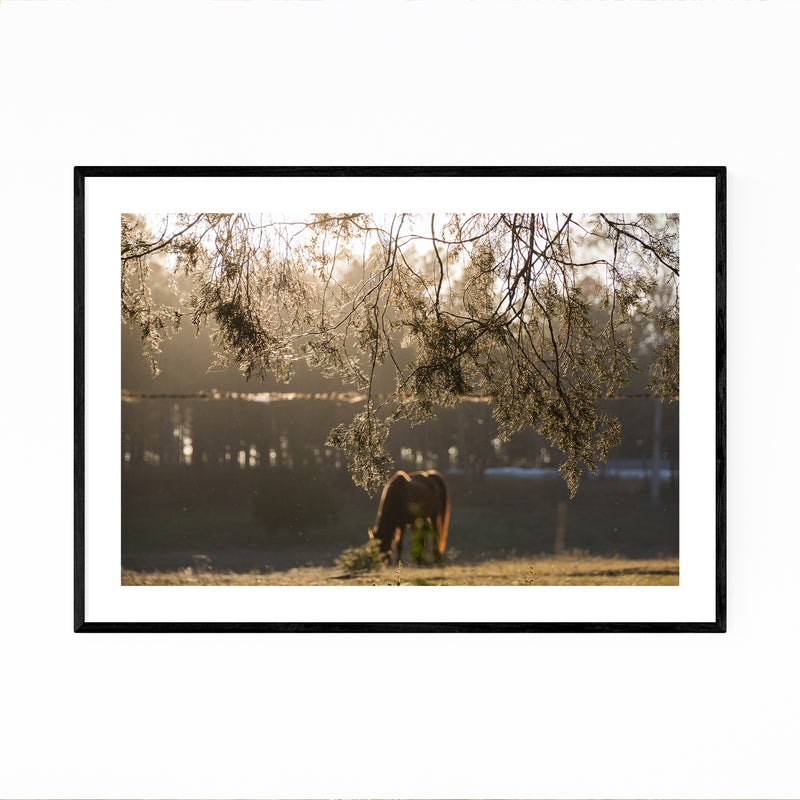 Rural Farm North Georgia Framed Art Print