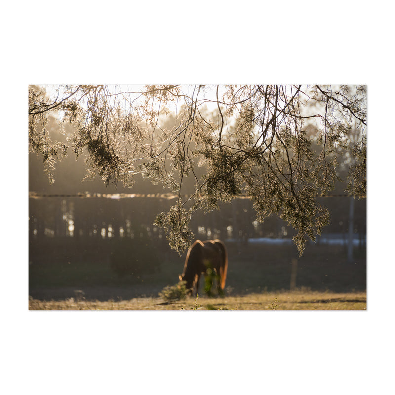 Rural Farm North Georgia Art Print