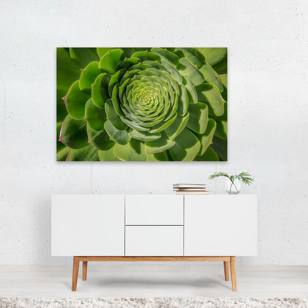 Floral/Botanical Succulents Photo Art Print