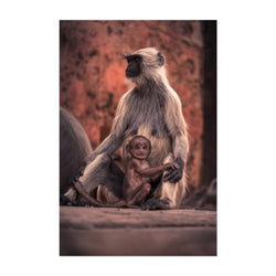 Baby Monkey Wildlife India Photo Art Print