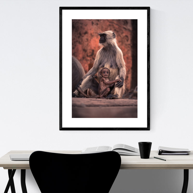 Baby Monkey Wildlife India Photo Framed Art Print