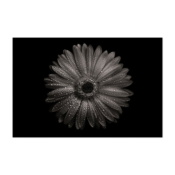 Toronto Floral Botanical Photo Art Print