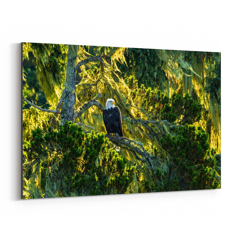Bald Eagle Bird Animal Wildlife Canvas Art Print