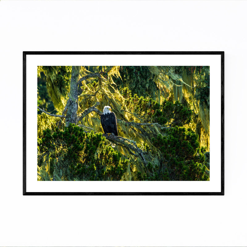 Bald Eagle Bird Animal Wildlife Framed Art Print