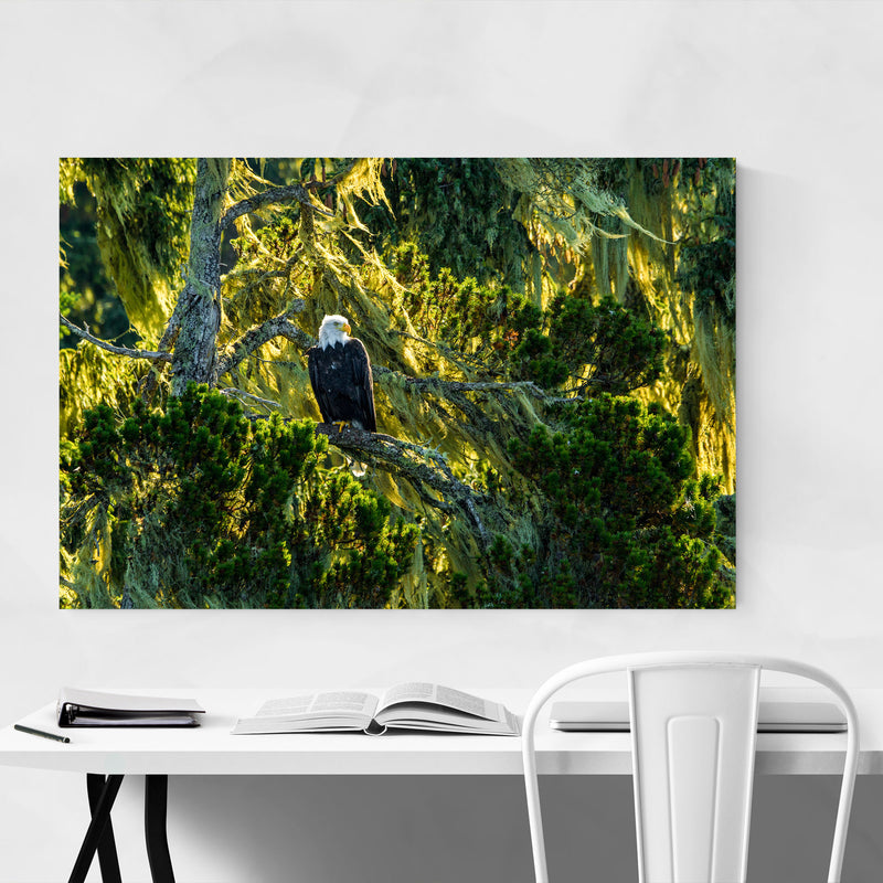Bald Eagle Bird Animal Wildlife Metal Art Print