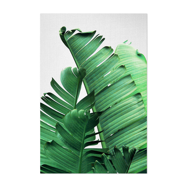 Banana Leaves Botanical Art Print