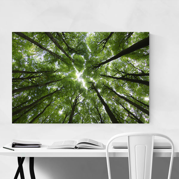 Forest Woods Nature Landscape Art Print