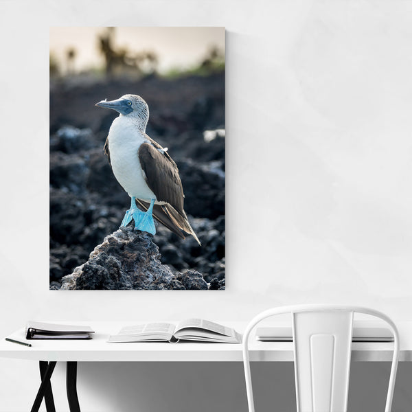 Blue Footed Boobies Bird Animal Art Print