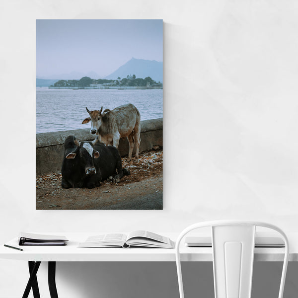 Udaipur India Bull Photo Art Print