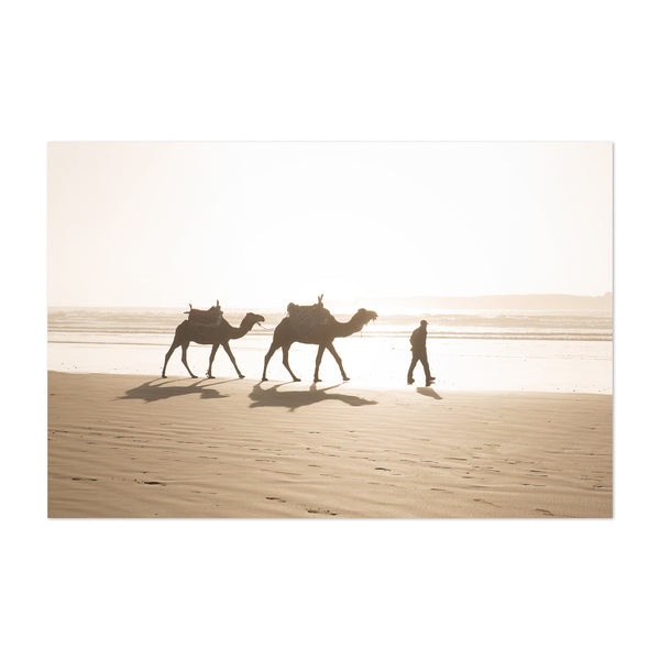 Camels Beach Sunset Morocco Art Print