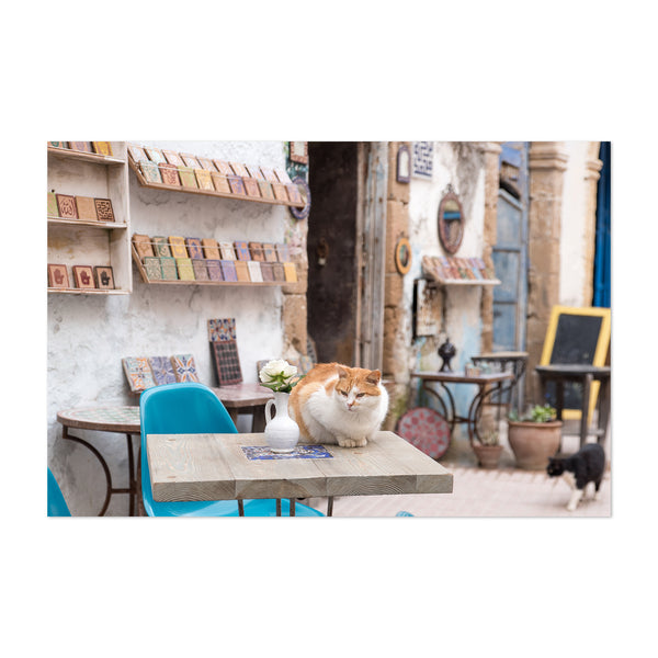 Cats Morocco Cafe Art Print