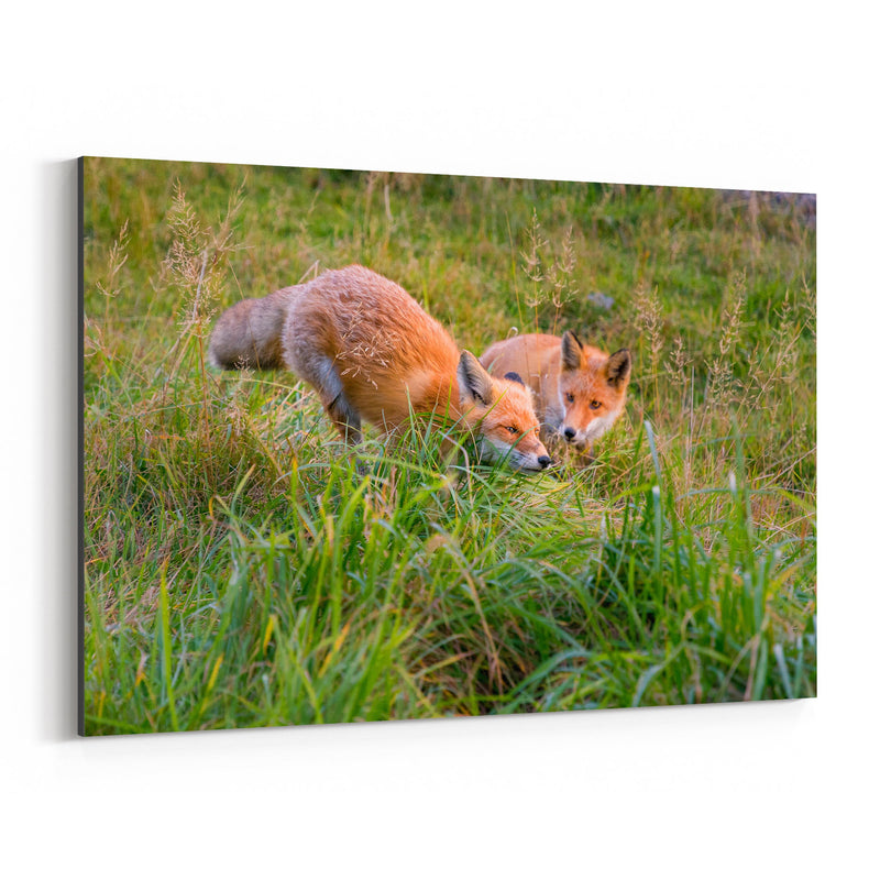 Red Fox Wildlife Nature Japan Canvas Art Print