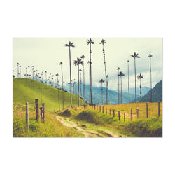 Salento Colombia Palms Photo Art Print