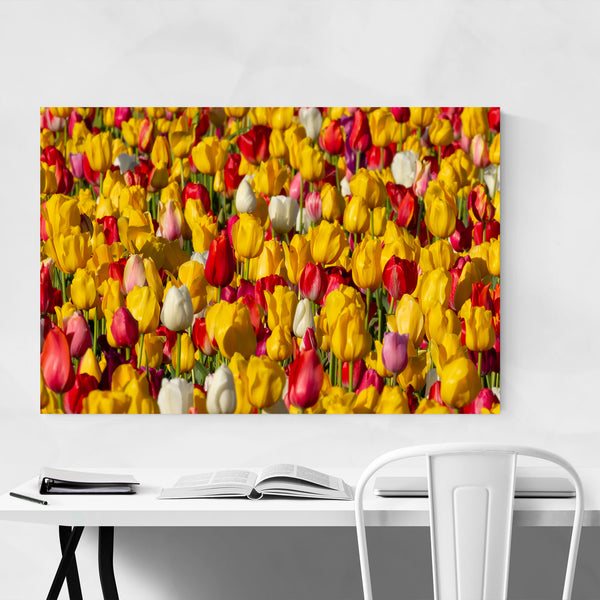 Oregon Williamette Valley Tulips Art Print