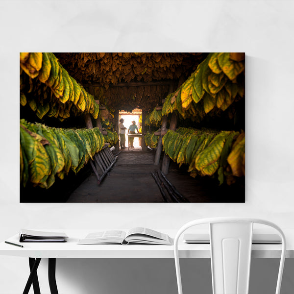 Cuba Cigar Farm Photography Art Print