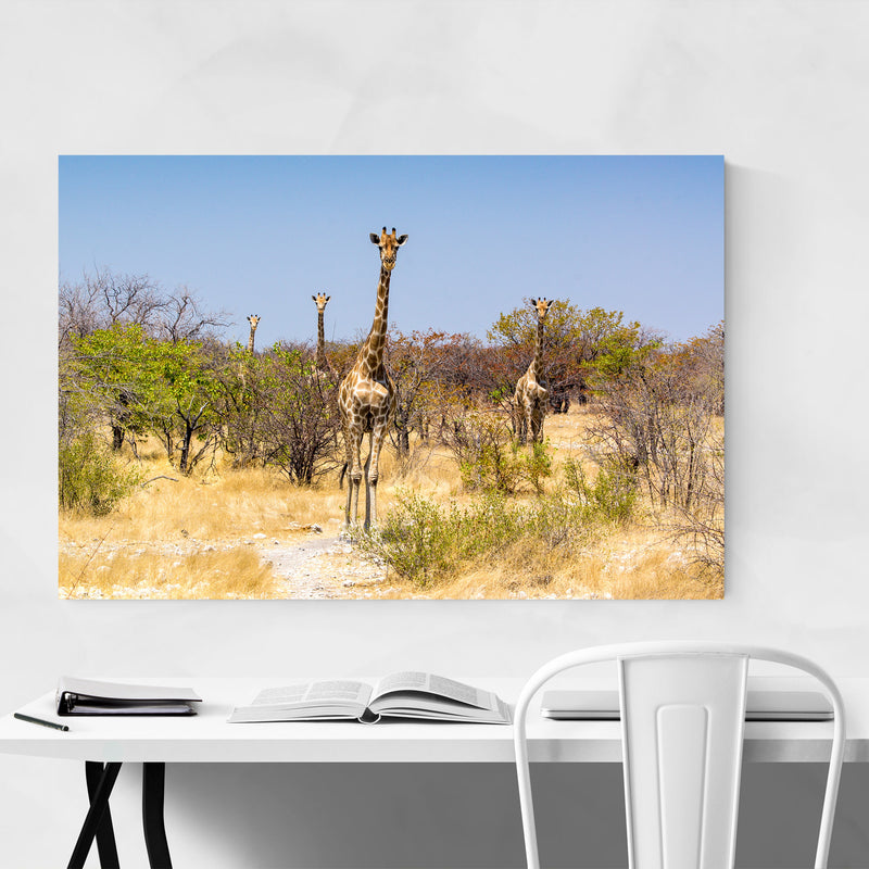 Namibia Africa Giraffe Wildlife Canvas Art Print
