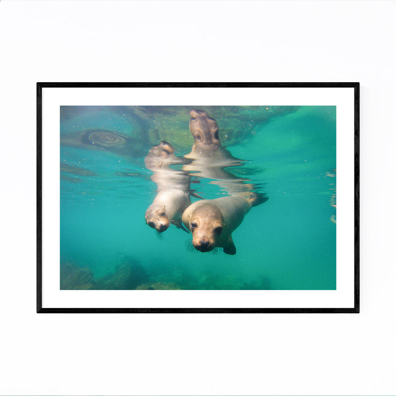 Sea Lions Wildlife Animal Framed Art Print